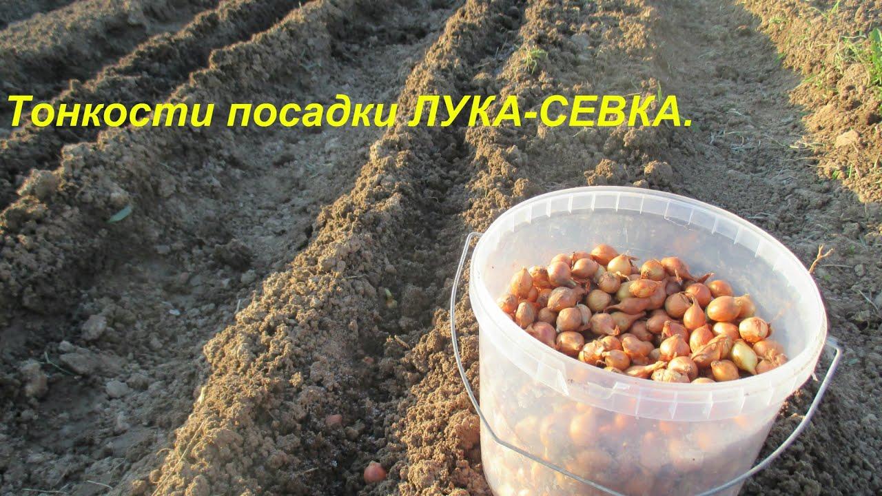 Юлия аланина дачные истории 31 фотография