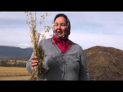 Сено солома – в чем разница? Применение сена и соломы в огороде