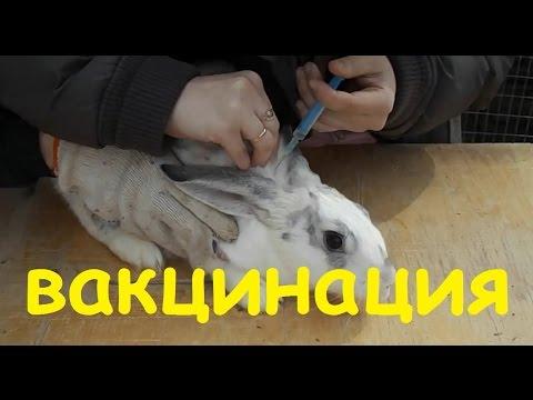 Чем привить кроликов в домашних условиях 700