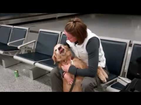 Soldier Reunion Dog Crying video