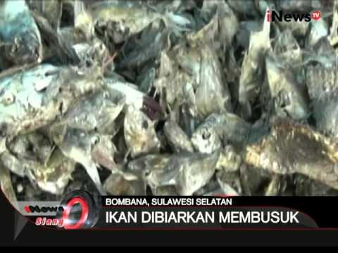 Pencemaran udara terjadi di Bombana, Sulsel, puluhan ton ikan dibiarkan membusuk - iNews Siang 09/02
