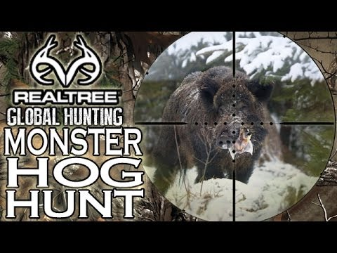 Epic Wild Boar Hunting In Hungary video