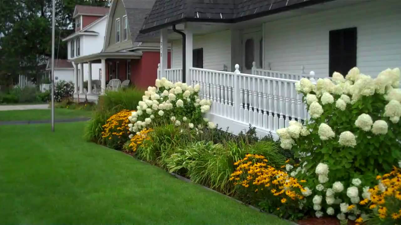 Limelight Hydrangea in the Landscape - YouTube