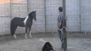 CAVALLO.  DOMA, ADDESTRAMENTO. CORSO DI DOMA DOLCE I PARTE. HORSE TRAINING