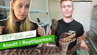 – Pass deg før han hogger! | TOPP TESTER YRKER: Reptilparken