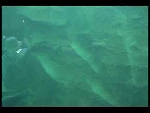 旭山動物園「あざらし館」遊泳シーン