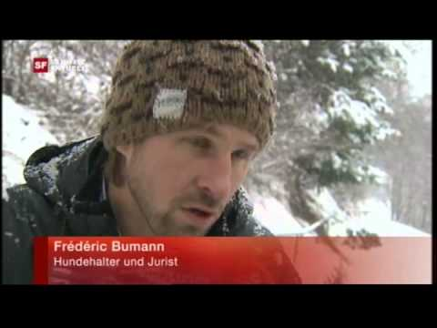 Swiss german TV  about dog bite guard