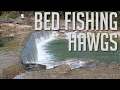 Bed Fishing Hawgs | Largemouth Bass Fishing Georgetown, TX