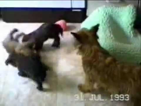 Animali divertenti, Funny Pets