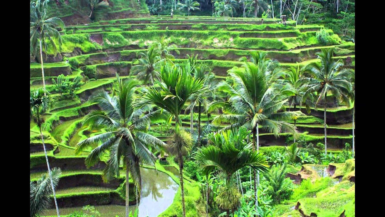 Foto tempat wisata the jungle 96
