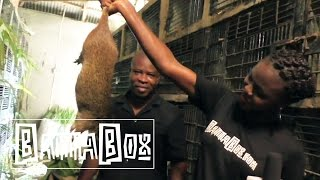 Nigerian Food How To Eat Giant Rat Meat