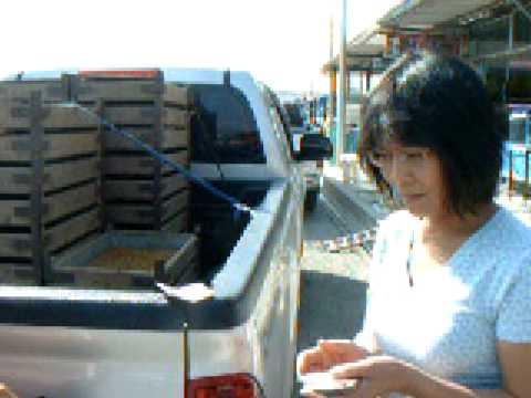Thailand, RSTDC : การซื้อขายหนอนนก, Mealworm 1