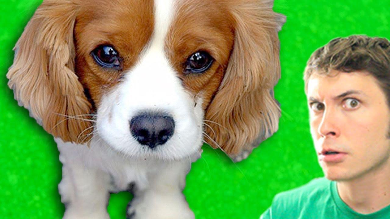 Cute talking puppy youtube
