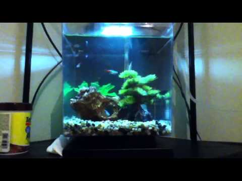 neon tetra tank 1 5 gallon cube led aquarium kit travel the world and experience vacations and