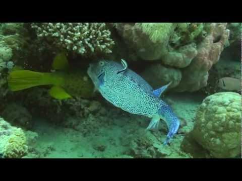 Fishes Porno.mpg video