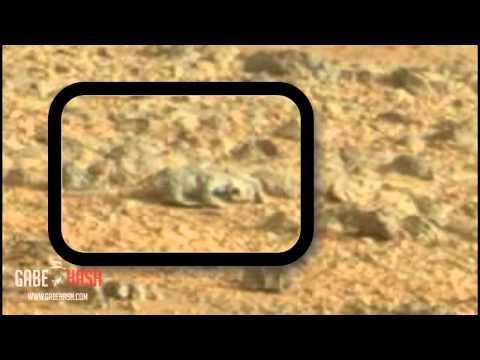 CURIOSITY MARS: ¿LAGARTIJA EN MARTE? 30 DE MAYO 2013