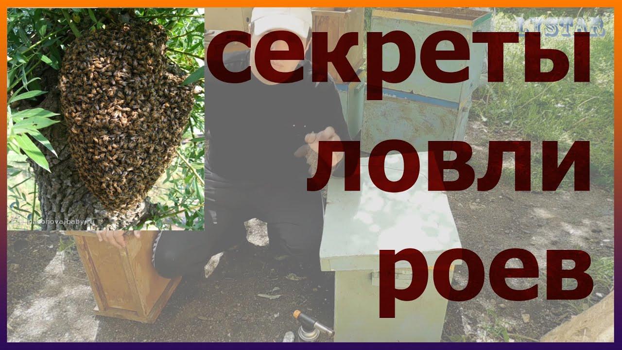 Как сделать ловушки для роя пчел