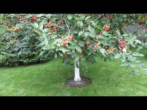 Что посадить в ПРИСТВОЛЬНЫЕ круги деревьев, чем оформить?