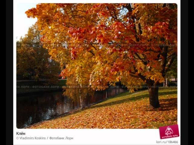 Смотреть цвет клена 13 фотография