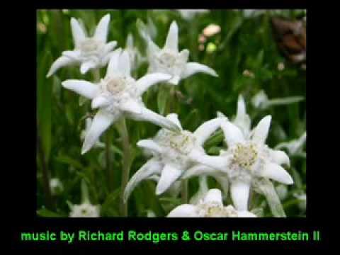 Oscar Hammerstein II - Edelweiss