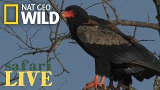 Safari Live - Day 56 | Nat Geo WILD