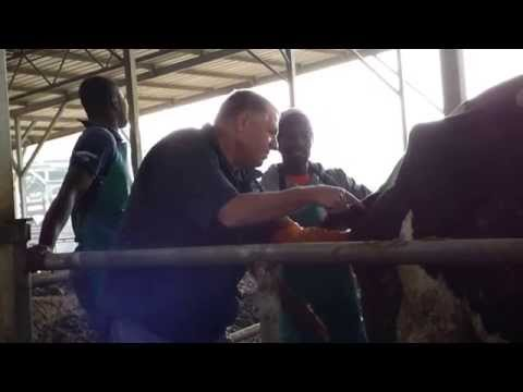 Artificial insemination students from Nigeria