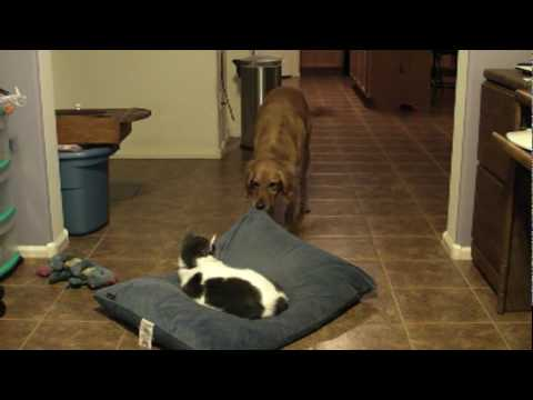 Dog Wants Cat Off Bed