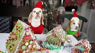 Dogs Build Gingerbread Village & Puppy Ruins it! Funny Dogs Maymo, Penny, & Potpie