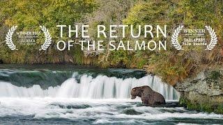 The Return Of The Salmon: An Award-winning Documentary