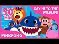 Lagu Welcome to Safari | Animal Songs | + Compilation | Pinkfong Songs for Children