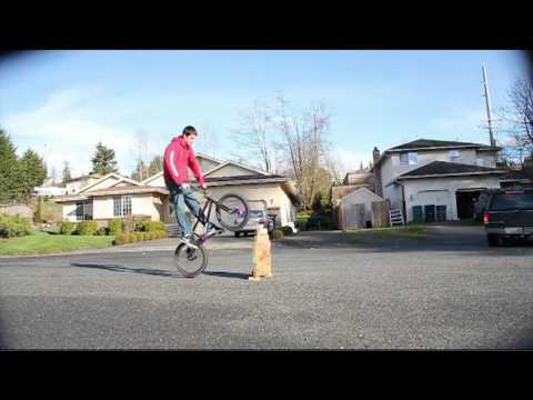 bmx how to bunny hop higher