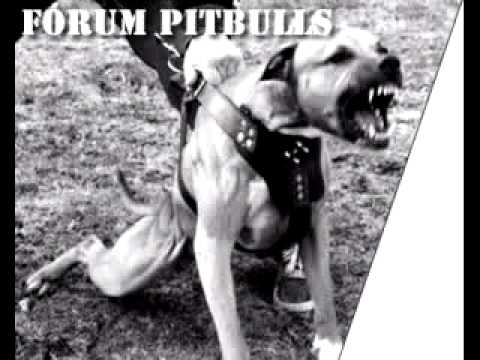 Pitbull v.s Rottweiler.mp4