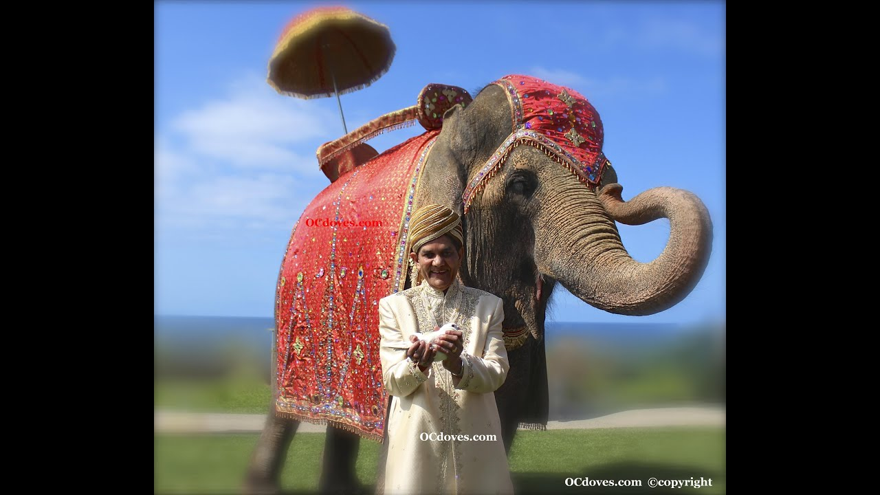 Elephant Wedding Elephant Wedding Dove 714 903