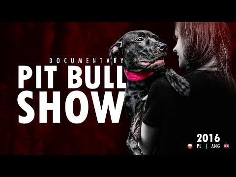 PIT BULL SHOW   PLANG