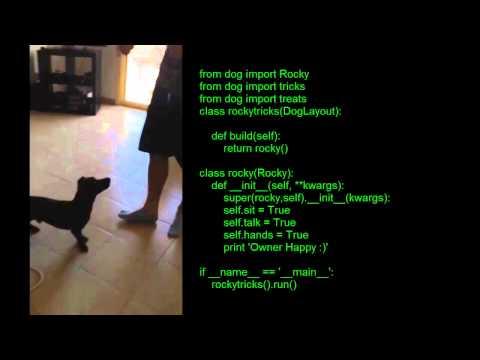 Python Dog