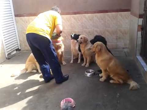 Dogs wait for feeding time