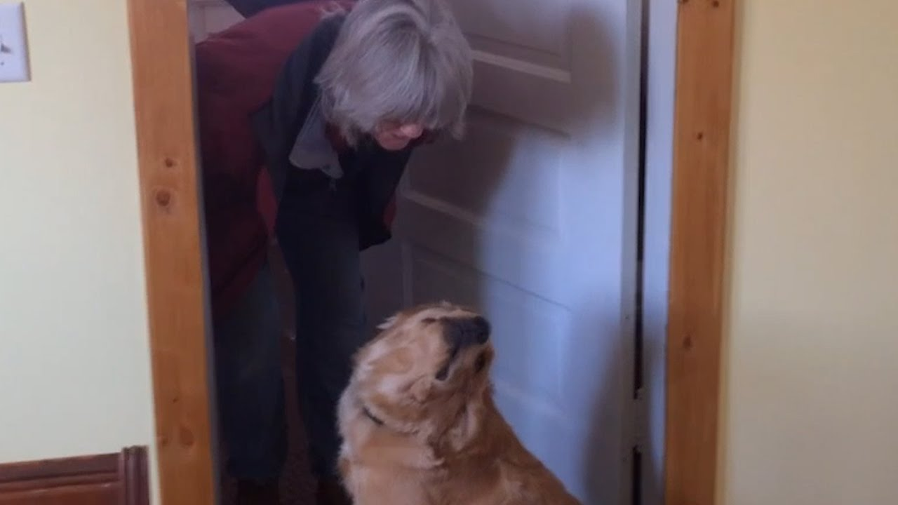 [Dog Refuses To Kiss Her Owner] Video