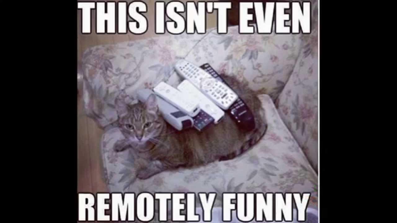 Show Me Funny Cat Videos Please