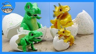A dinosaur wakes from the egg. Dinosaur egg toy. Tyrannosaurus and Triceratops.