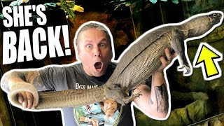 I GOT IT BACK!!! NIGHT NILE MONITOR LIZARD FOR THE REPTILE ZOO!!!   BRIAN BARCZYK