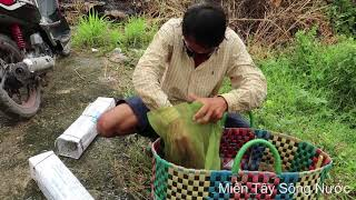 Phần 2 : Võ Minh Phụng Rợn Người Khi  Đụng Phải Cặp Rắn Hổ Mang Khủng Khiếp