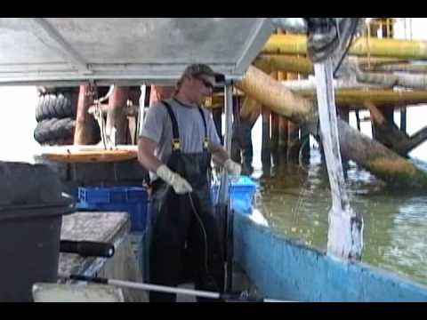 COMMERCIAL FISHING FOR MANGROVE SNAPPER AND SCHOOLMASTER SNAPPER
