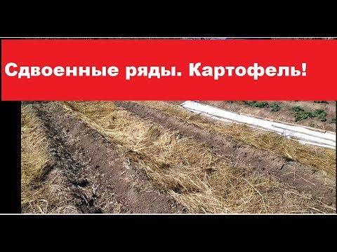 Сдвоенные ряды. Посадка КАРТОФЕЛЯ - 2018г.