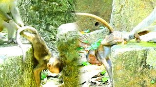 Seriously Baby Lori Nearly Die Cuz Little Monkey|This Little One Push and Pull Lori Nearly Break Leg