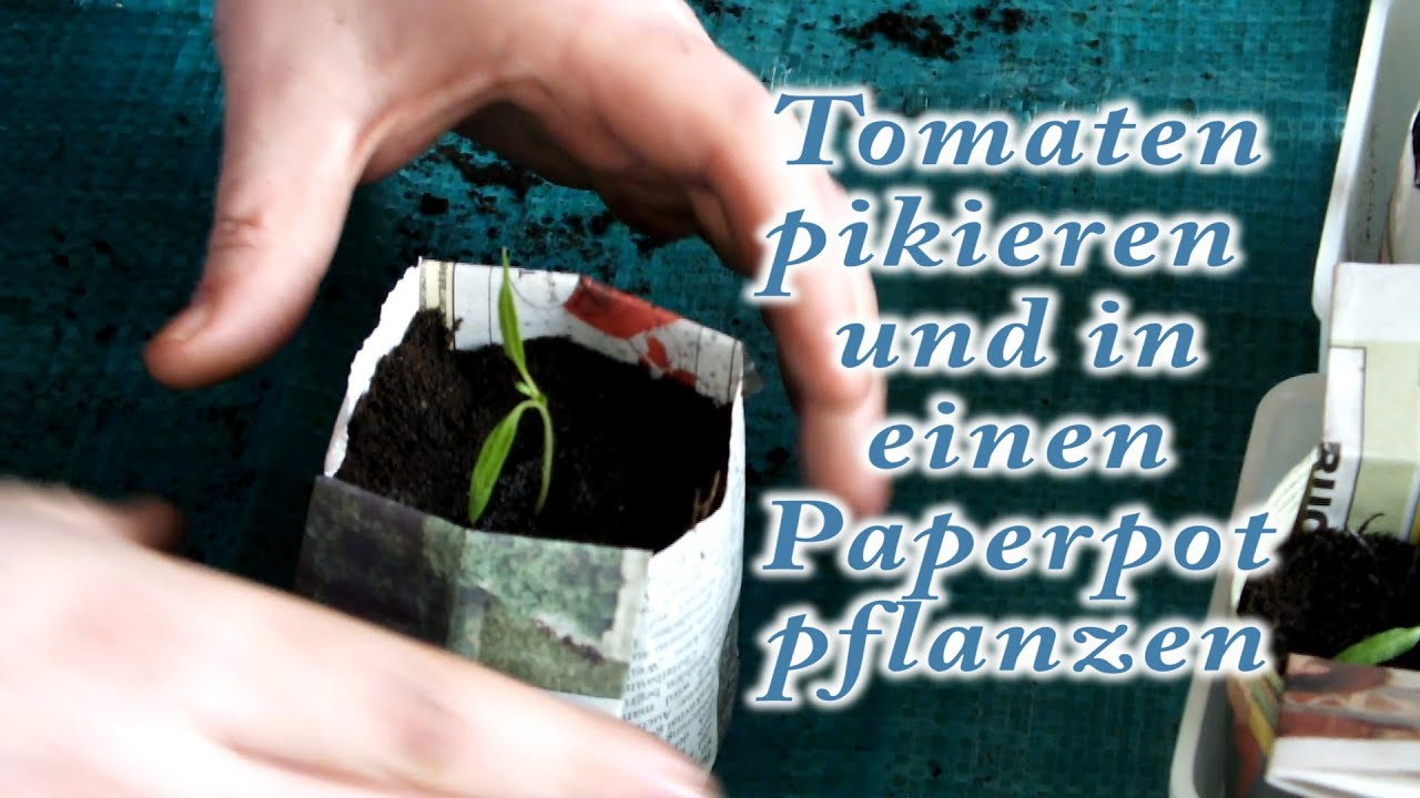 tomaten pikieren in paperpot youtube. Black Bedroom Furniture Sets. Home Design Ideas