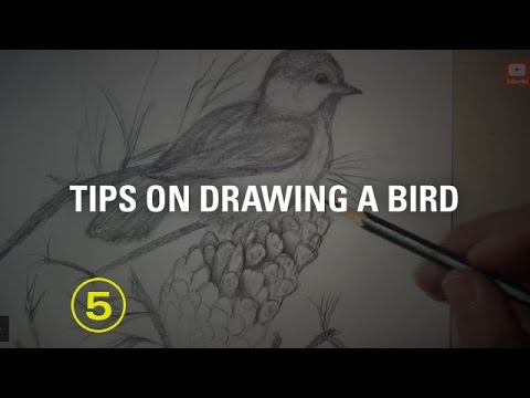 Critique No. 17: Tips on Drawing a Bird