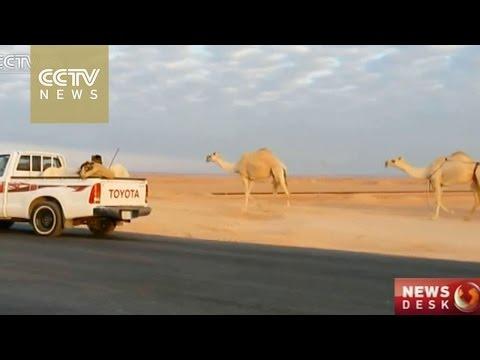 11 new MERS cases in Saudi Arabia, 3 fatalities