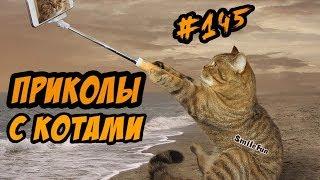 Приколы с Котами - Смешные коты и кошки 2018 - Озвучка КОТОВ - Funny Cats