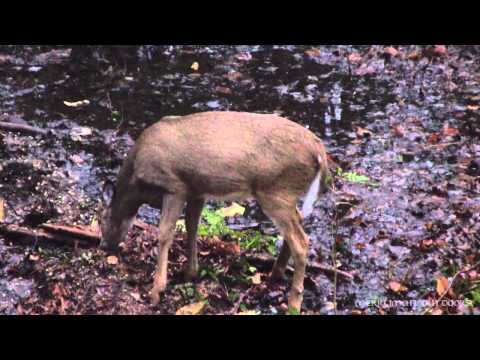 Crossbow Doe Dropped - Deer Season 2012