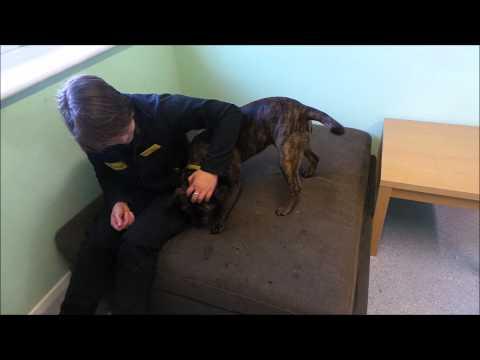 Dogs Trust Salisbury Thelma